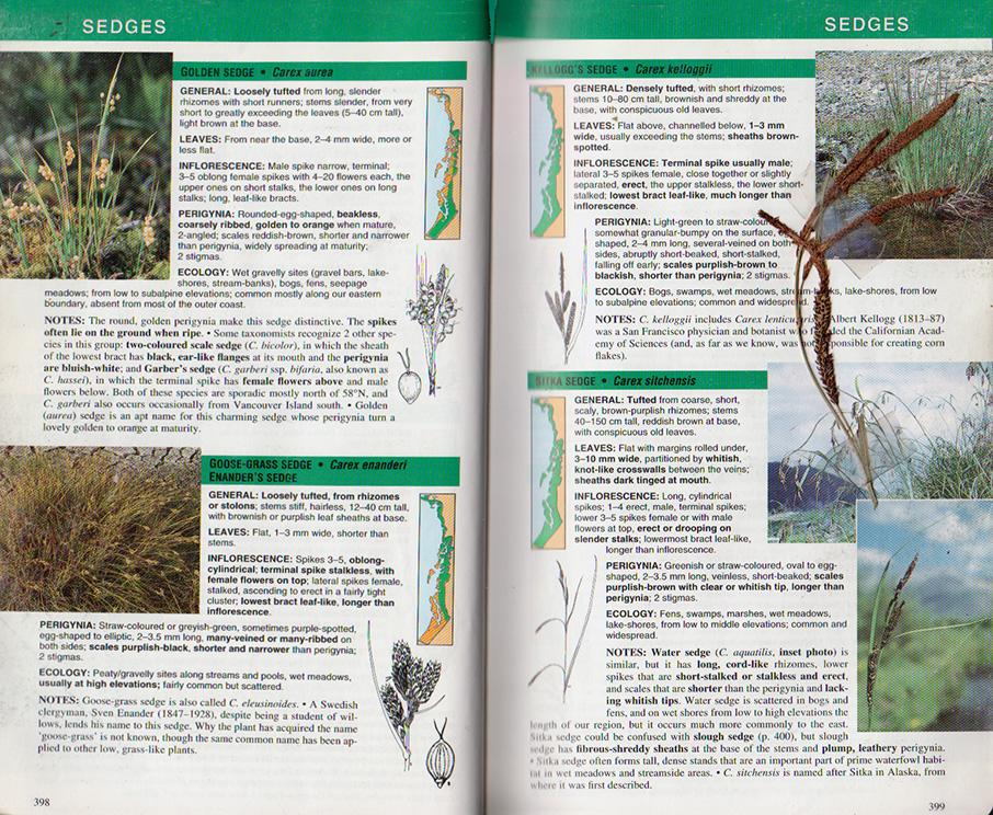 Plants Of The Pacific Northwest Coast Juneaunature
